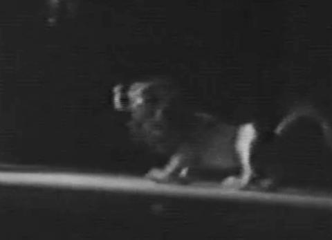 Effets spéciaux: métamorphoses d'Olibrius – Le Chat botté (1950)